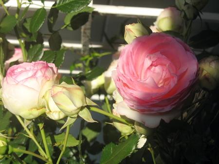 Flowers1_5
