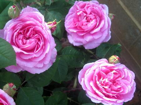 Flowers3_2