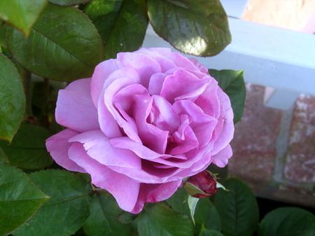 Flowers6_4