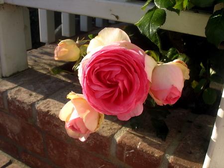 Flowers8_5